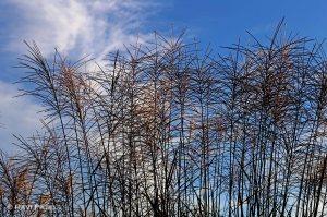 Grass Against the Sky