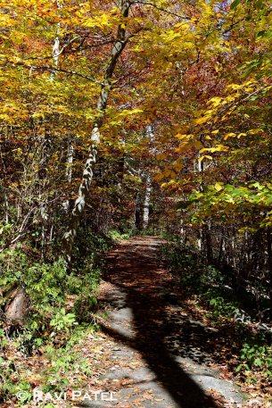Walking in the Woods in Fall