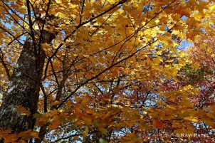 A Colorful Canopy