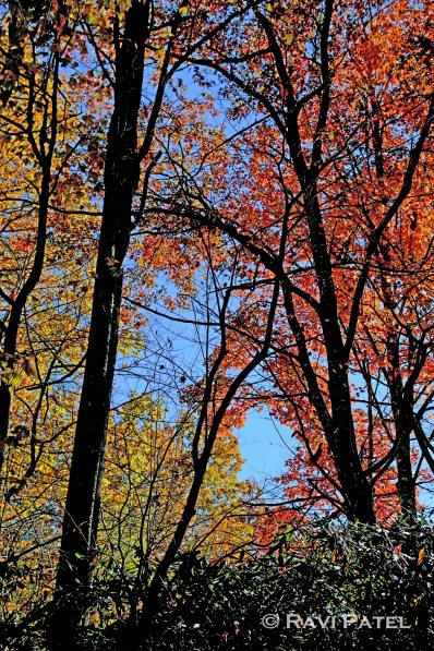 A Layer of Fall Colors