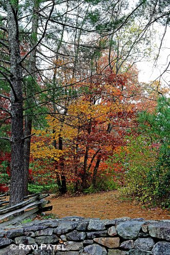 A Colorful Path into the Woods