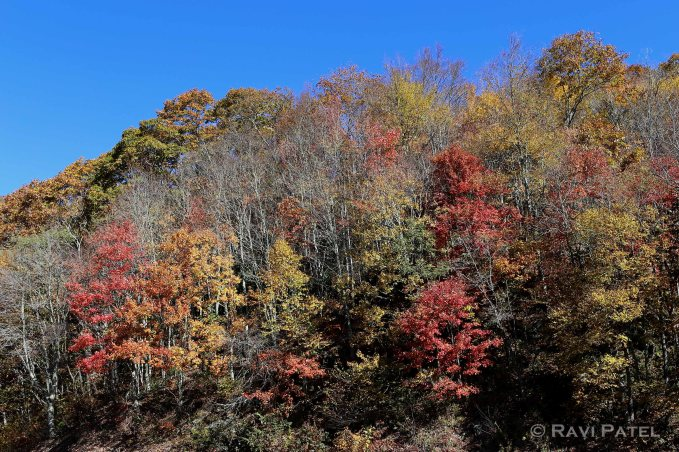 An Assortment of Tree Colors