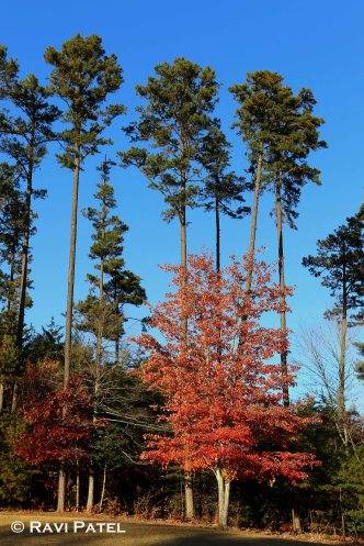 An Assortment of Tree Colors in Fall