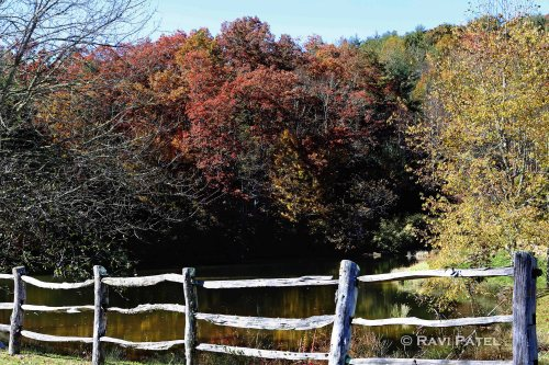 Falls Colors over a Fence