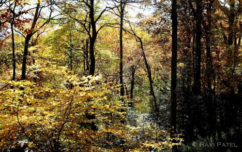 Woods in the Fall