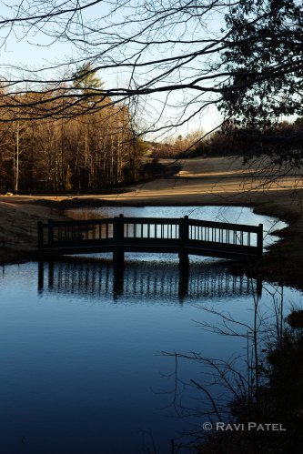 A Bridge Over a Pond