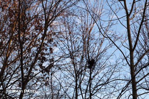 A Nest Revelaed