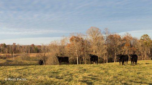 A Rural NC Farm Scene