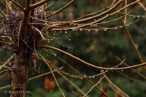 A String of Raindrops