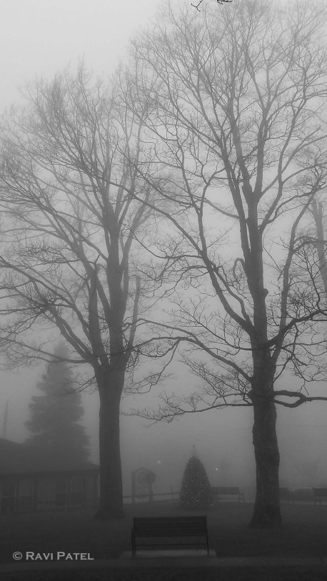 A View of the Fog