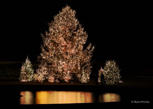 Christmas Tree Reflections