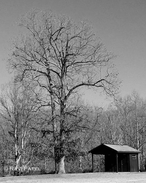 The Bare Tree