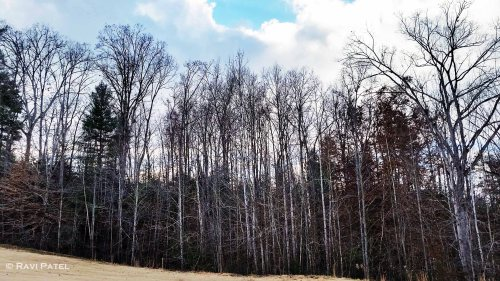 Trees in the Late Fall
