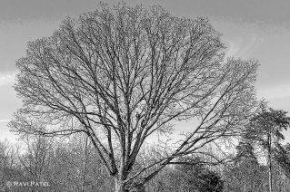 Art in a Leafless Tree