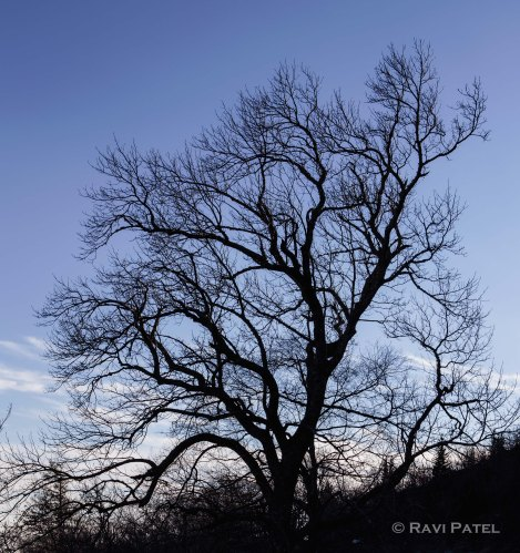 The Bare Essence of a Tree
