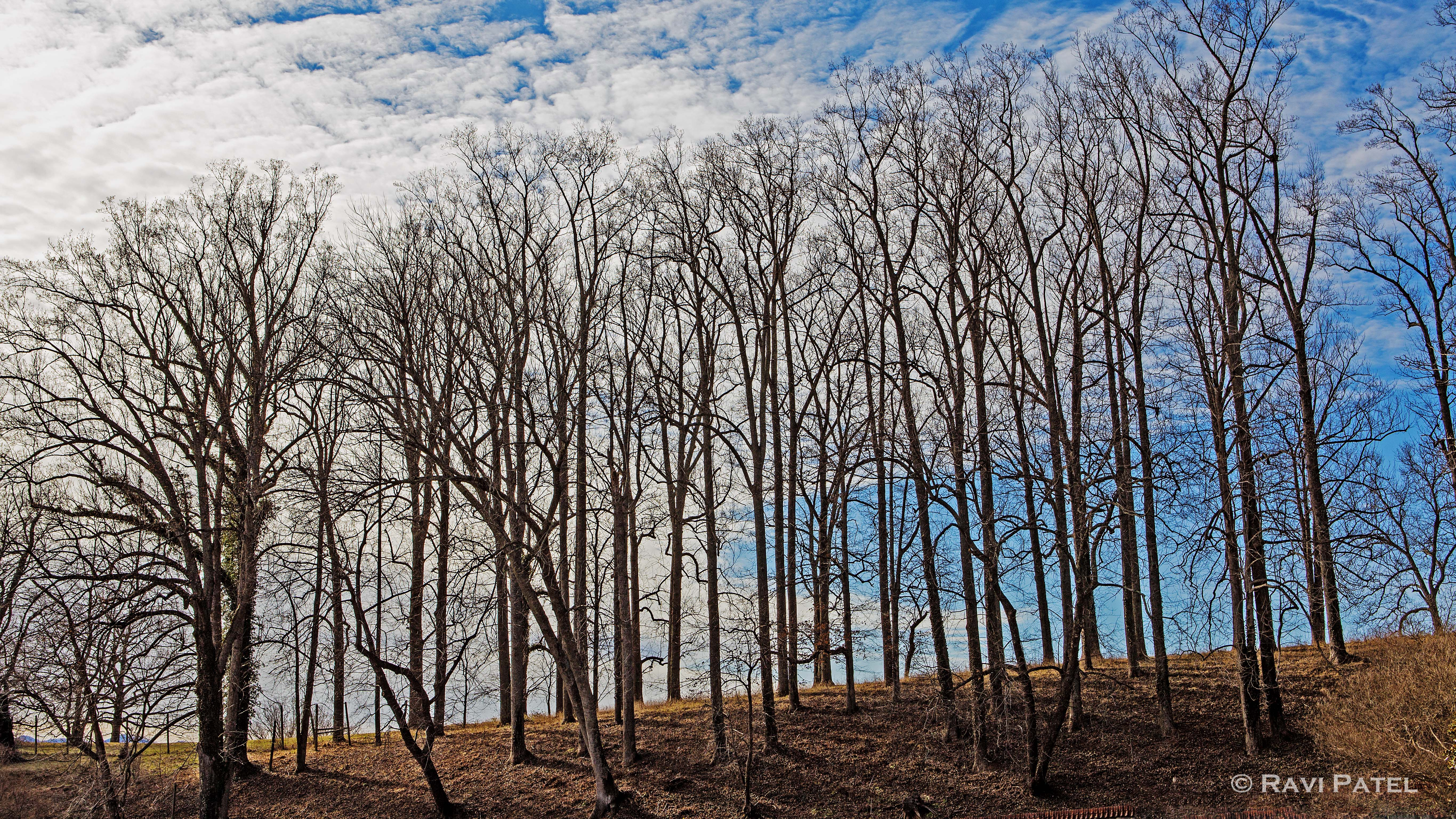 a row of bare trees photos by ravi