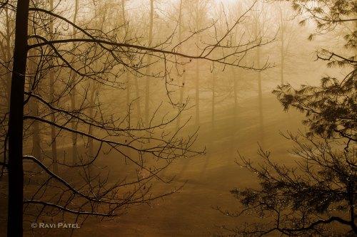 A Foggy Glow of Sunrise