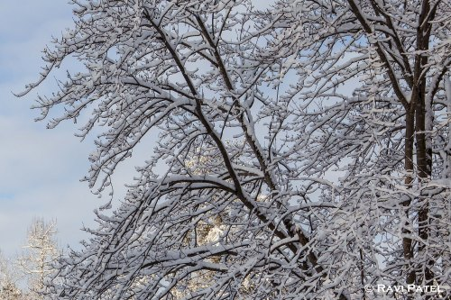 Beauty of Snow on Bare Branches