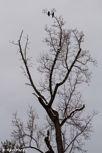 Birds on a Barren Tree