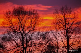 Tree Silhouettes Against a Colorful Sky