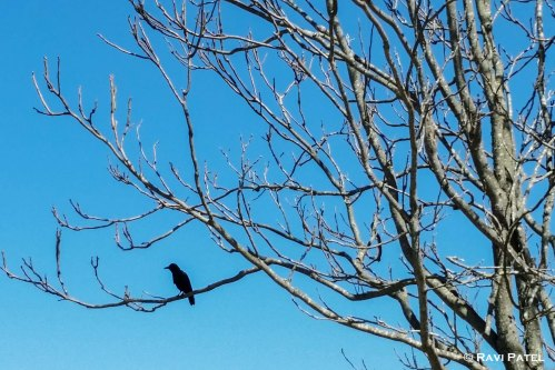 A Lonely Bird