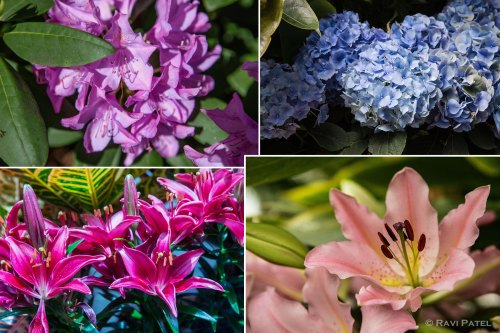 A Collage of Flowers