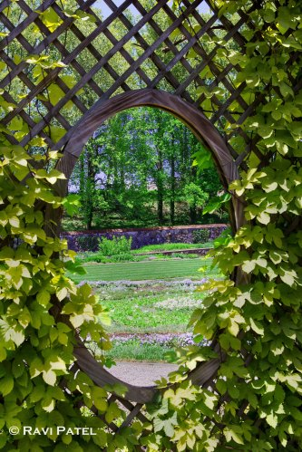 A Garden View Through the Lattice