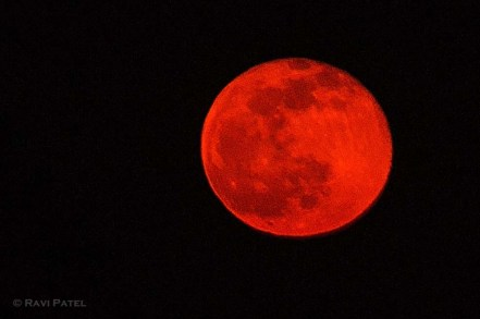 Bright Orange Full Moon