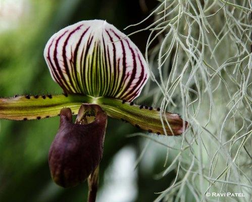 Designs in a Flower