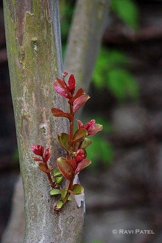 Fresh Growth on a Tree