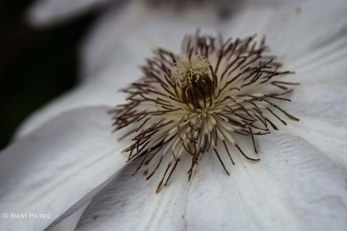 The Intricate Details of a Flower