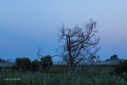 Birds on a Tree on a Foggy Morning