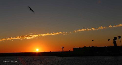 Birds Soaring at Sunset