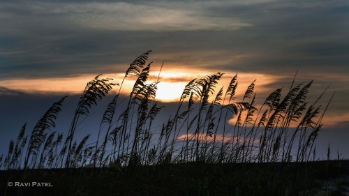 Tall Grass Silhouettes at Sunset