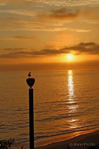A Bird Perch at Sunset