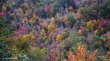 A Canvas of Natural Colors