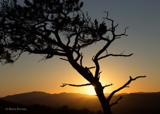 A Tree Silhouette at Sunset