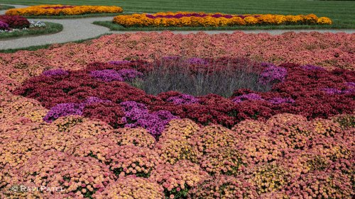 Color in the Flowerbeds