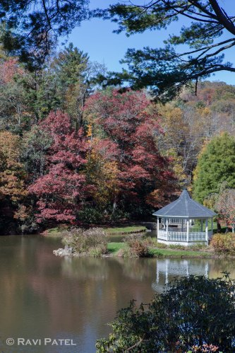 Fall Colors by the Gazebo