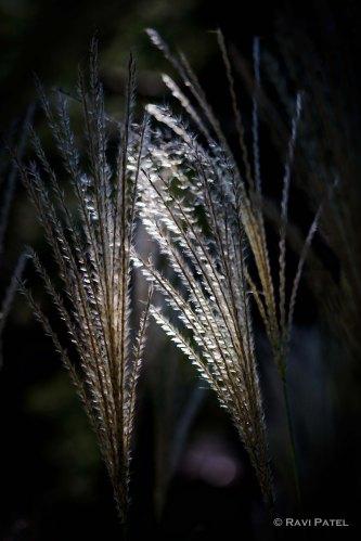 Naturally Lighted Tall Grass