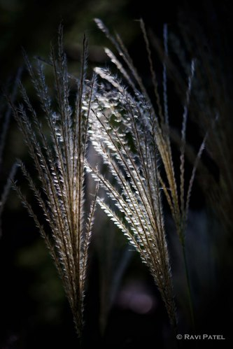 Naturally Lighted Tall Grass