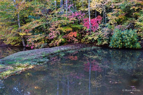 Colorful Pond Reflections