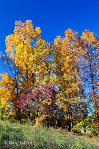 Colorful Trees Aganist the Sky