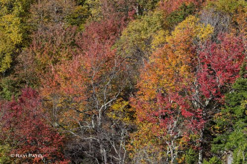 Layers of Fall Colors