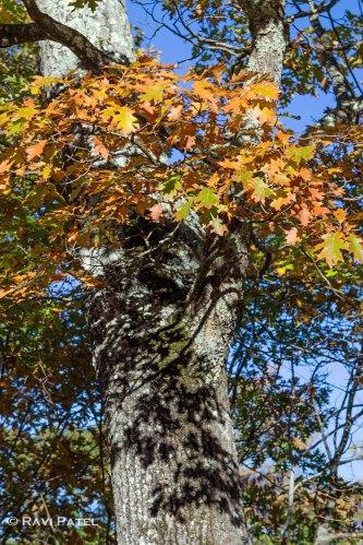 Shadows of Fall Leaves