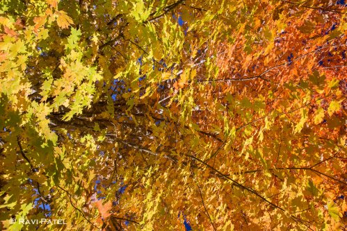 The Brilliance of Fall Colors