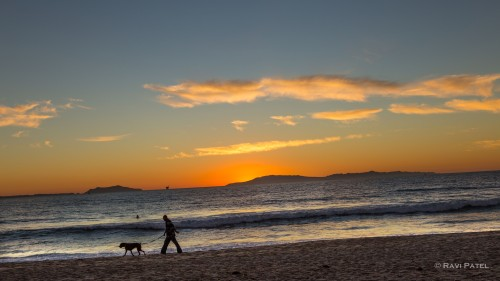 A Man and HIs Best Friend at Sunset