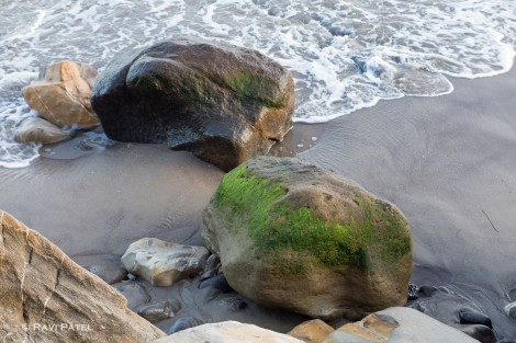An Array of Textures at the Seashore