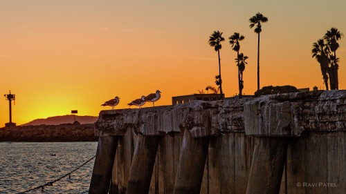 Birds on a Pier at Sunset