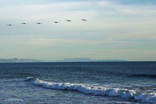 A Bird Formation Over the Ocean